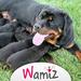 Reproduction et sexualité du chien - Wamiz